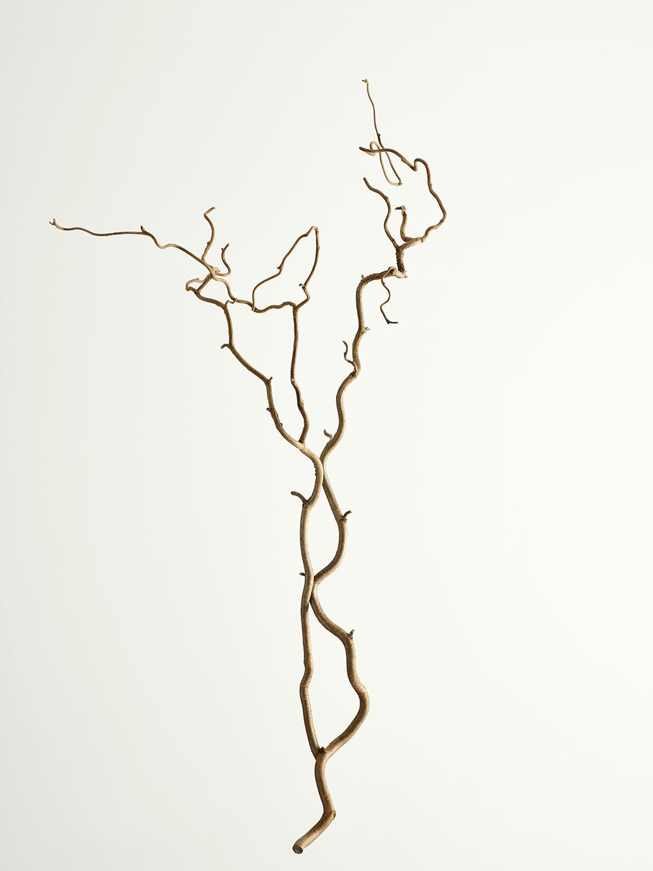 ast-haselnussbaum-ohne-blaetter-stil