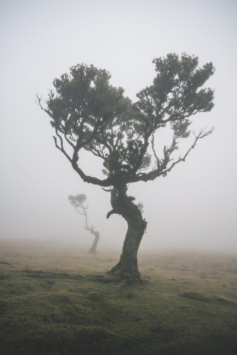 baum-alleine-nebel-mystisch-stimmung