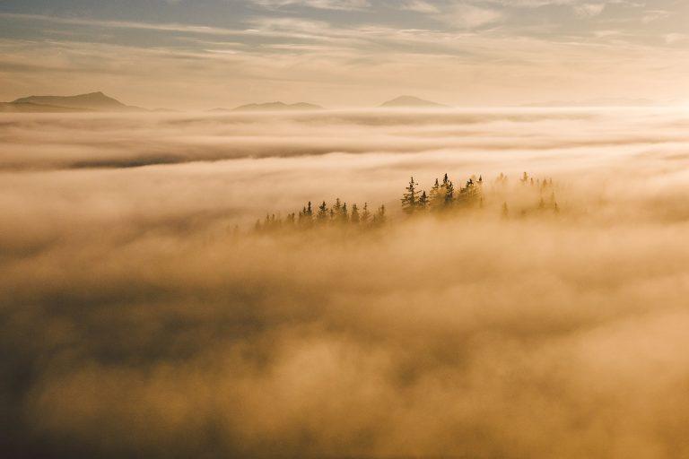 baumspitzen-nebel-sonnenaufgang-warm-licht