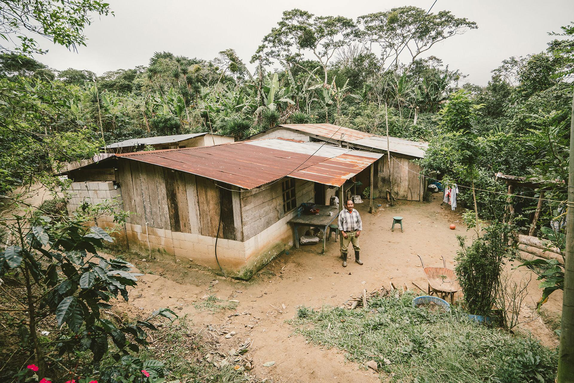huette-guatemala-wald-kaffeeplantage