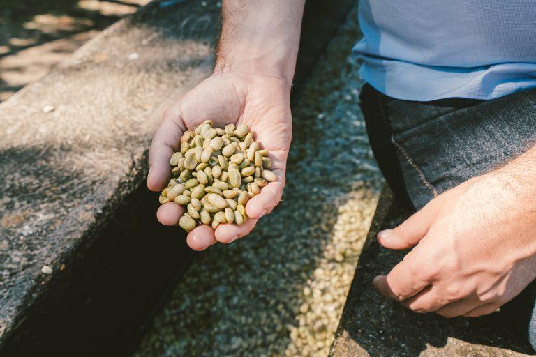 kaffee-bohnen-roh-getrocknet-hand