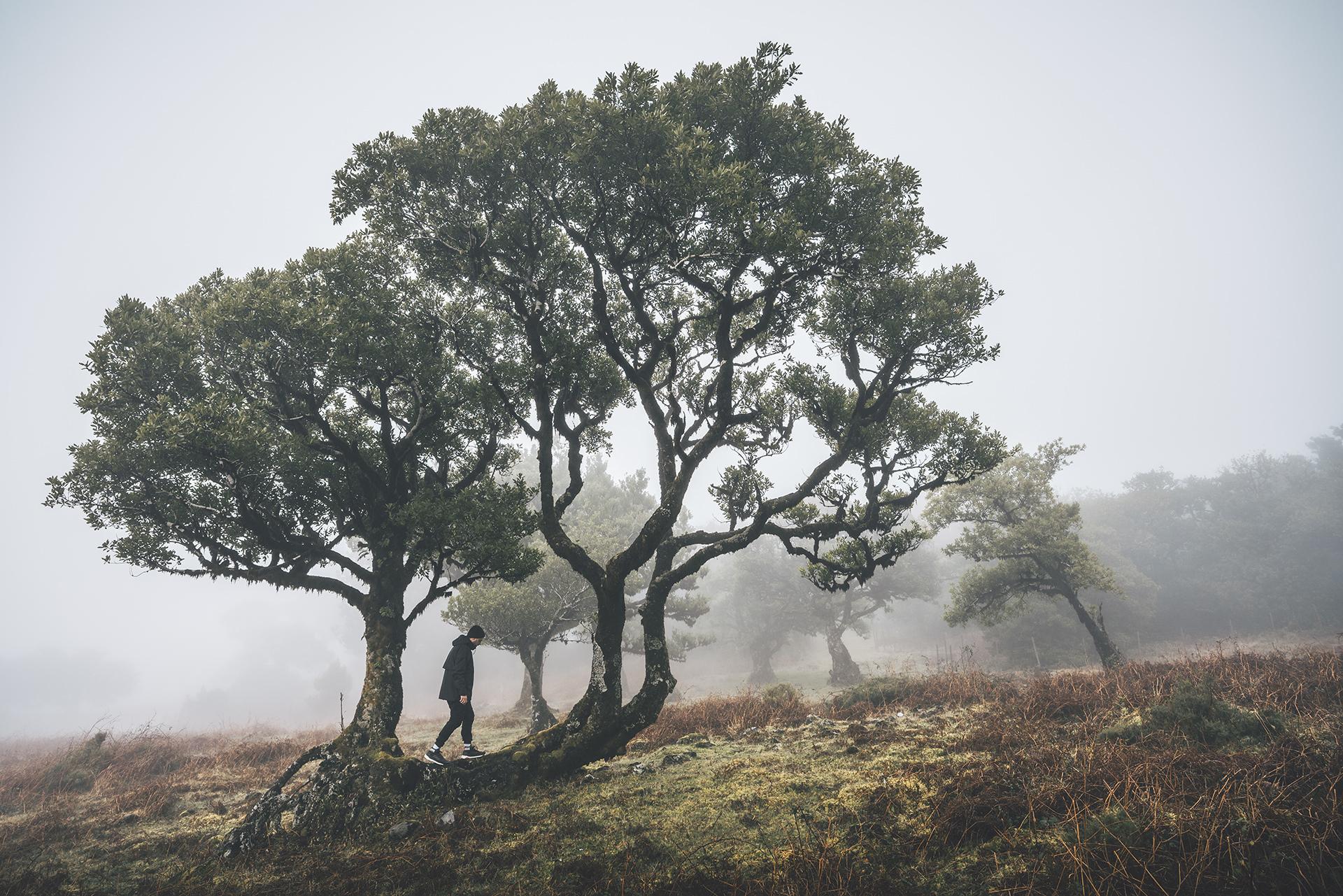 natur-wandern-nebel-sonne