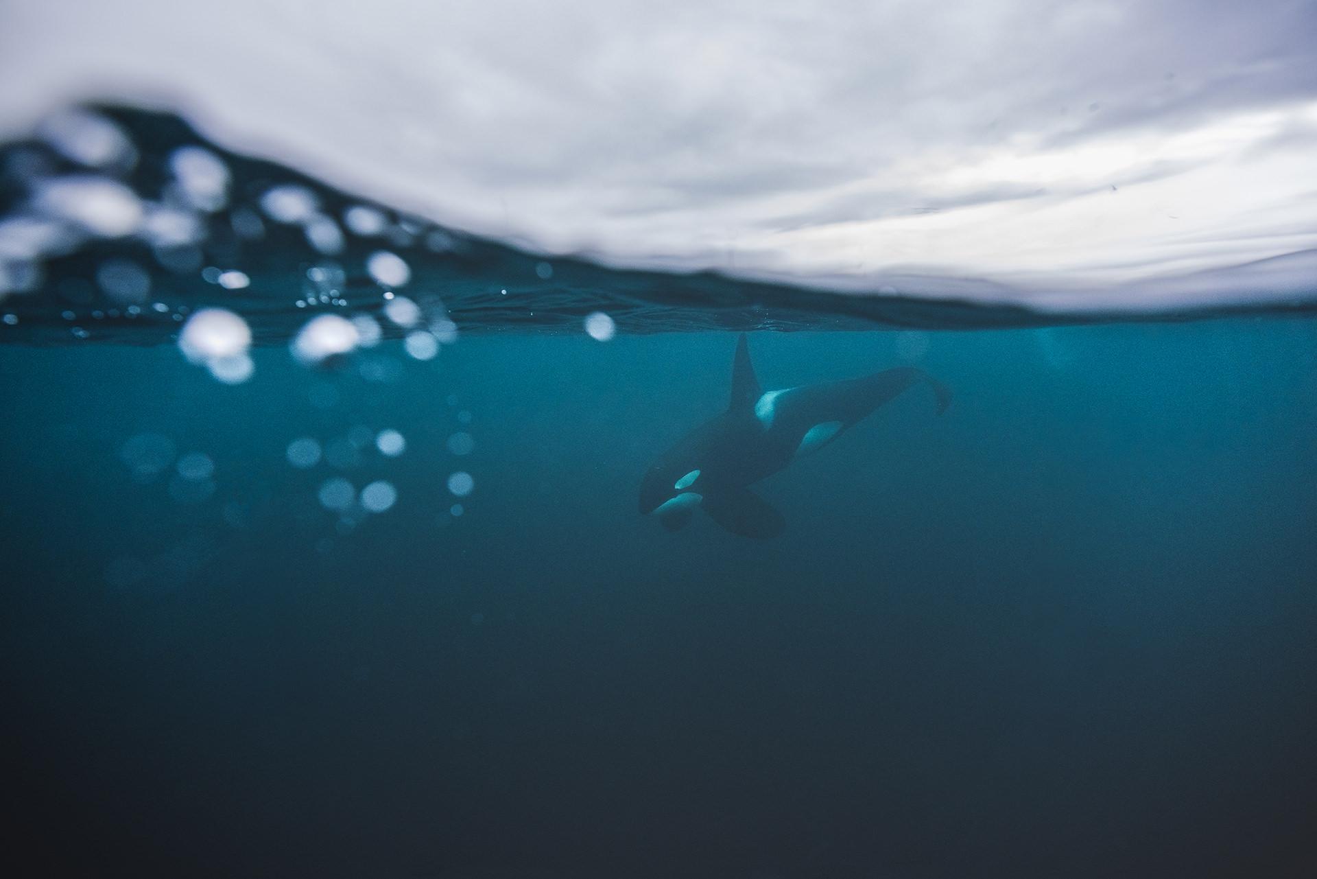 orca-welle-tauchen-unterwasser