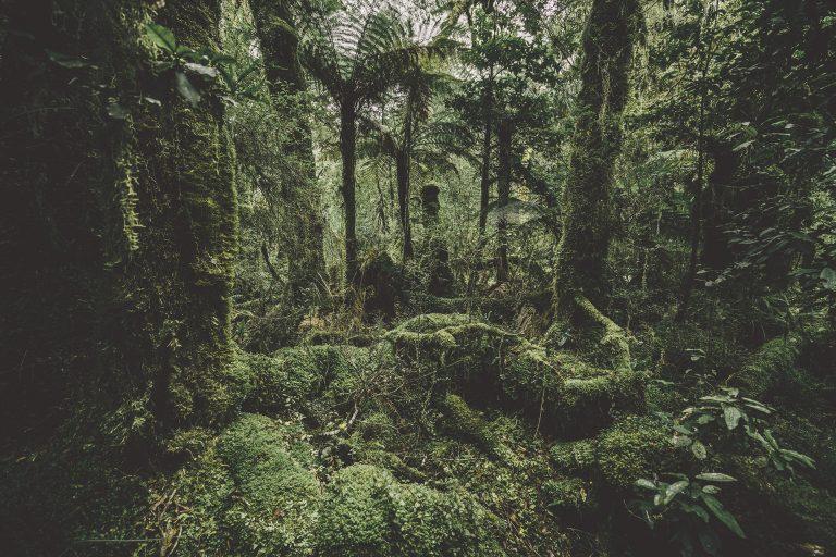 regenwald-gruen
