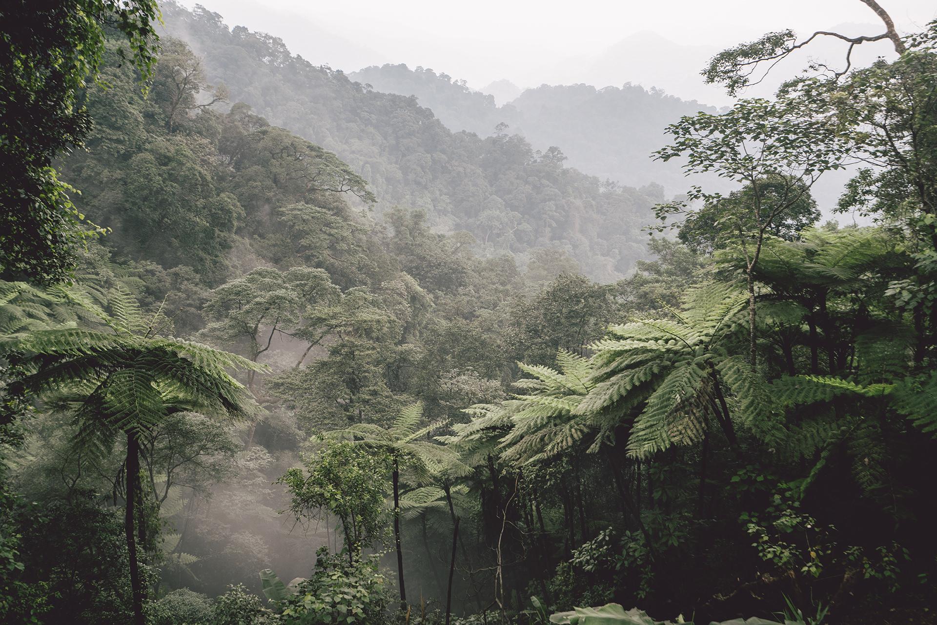 regenwald-luftfeuchtigkeit-gruen