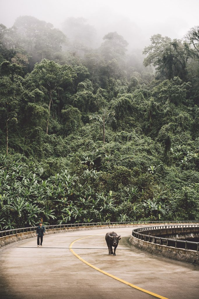 vietnam-strasse-regenwald-bueffel-mann