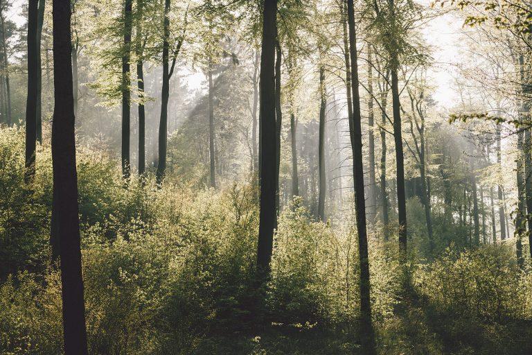 wald-baeume-sonnenstrahlen-stimmung