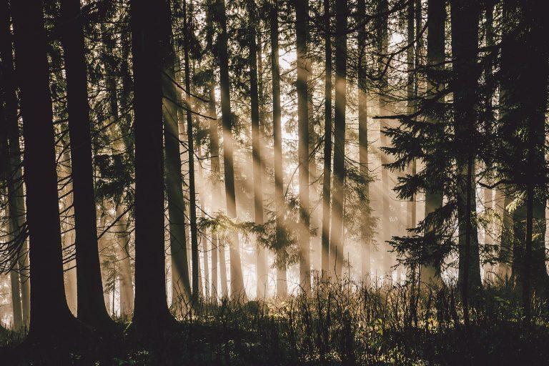 wald-licht-sonnenstrahlen-baeume