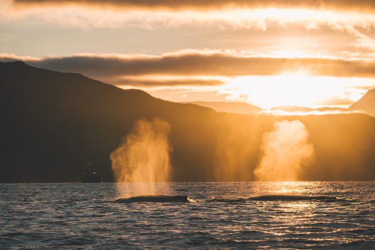 wale-atmen-sonnenuntergang-meer-reisen