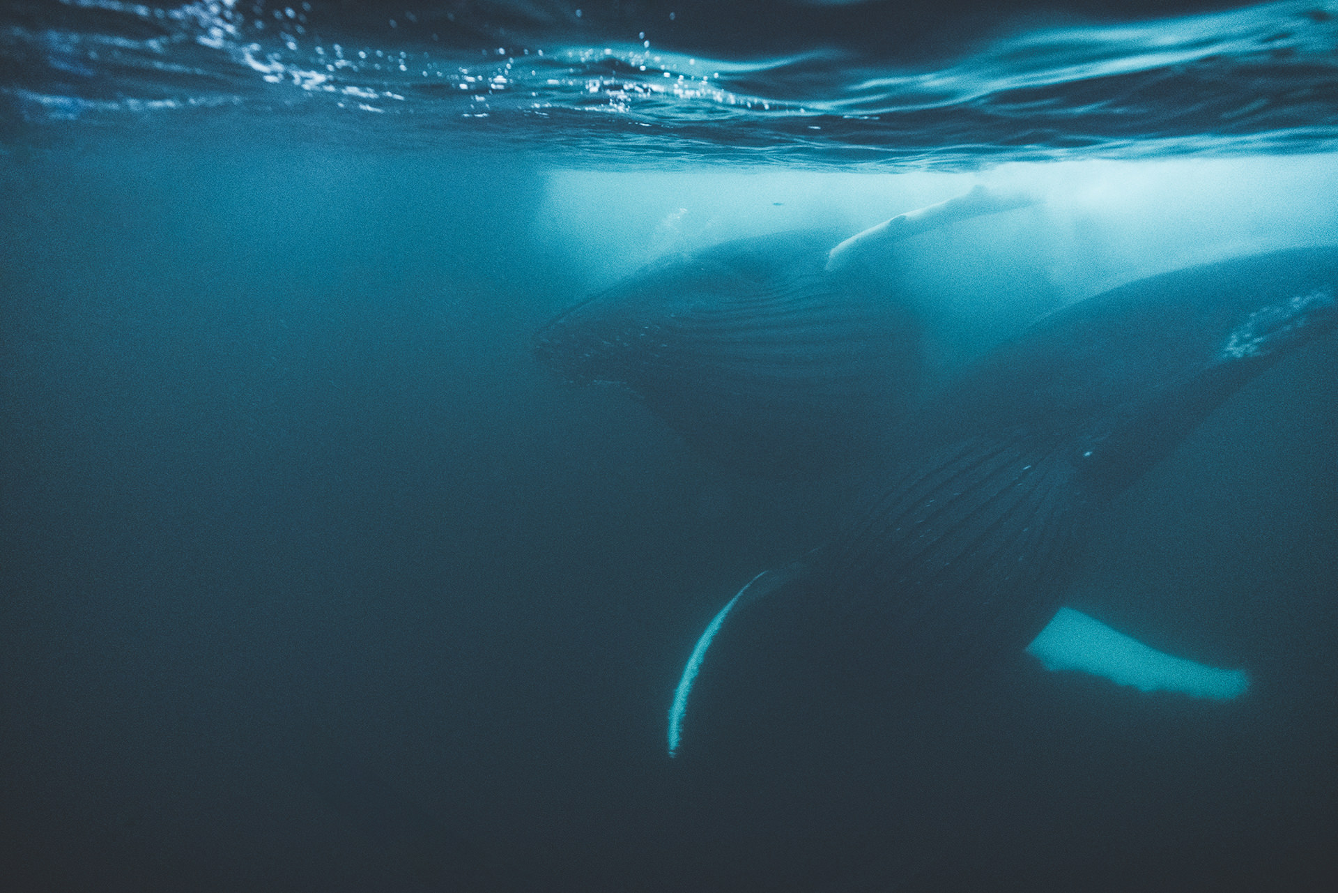 wale-unterwasser-tauchen