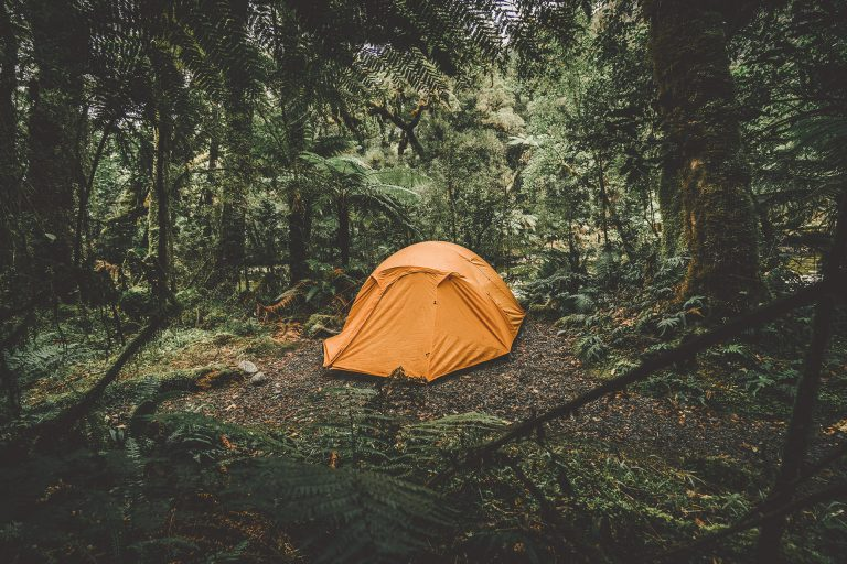 zelt-dschungel-campen