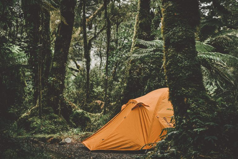 zelt-regenwald-campen