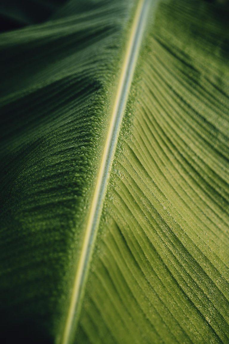 palmenblatt-detail-gruen-natur