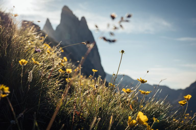 val-gardena-gebirge-italien-bergwiese
