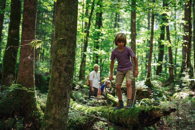 wald-familie-entdecken-sommer