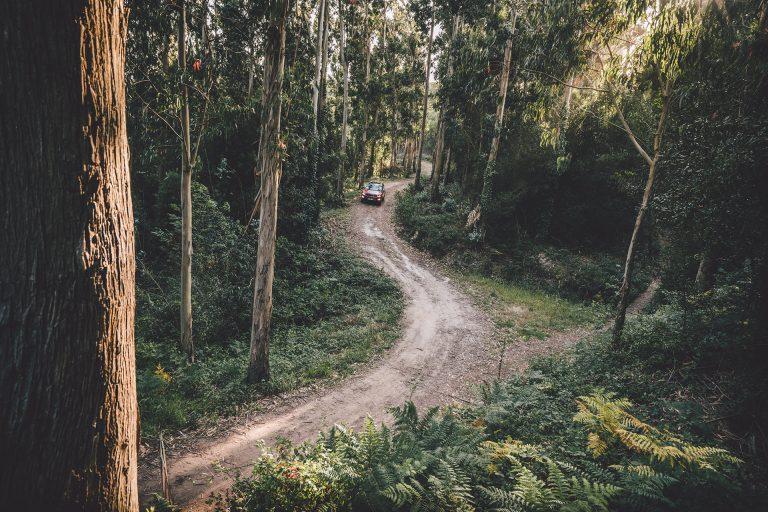 wald-strasse-jeep-abenteuer
