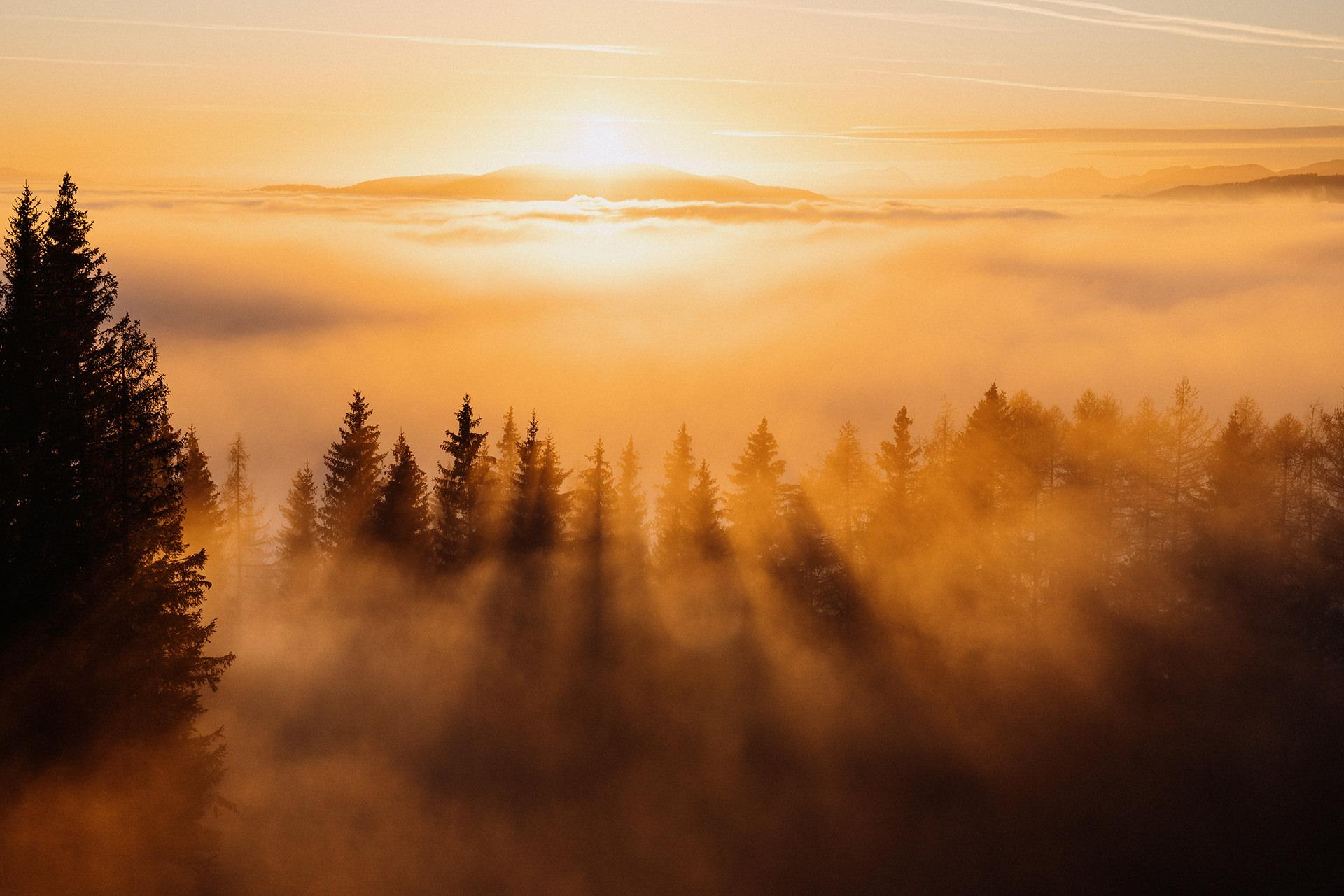 baeume-berge-nebel-sonnenuntergang